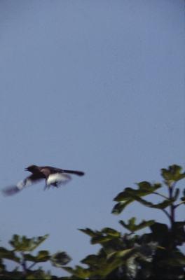 PLACE mockingbirds 2