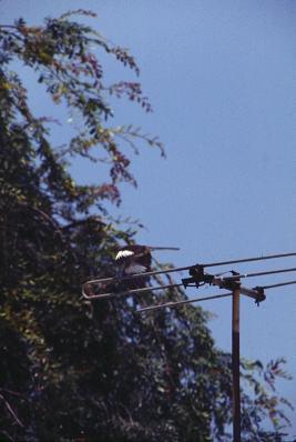 PLACE mockingbirds 3